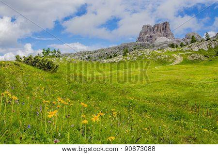 Yellow flowers  Dolomites Mountains, Italy