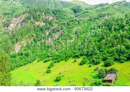 Green alpine meadows, Zillertal, Austria