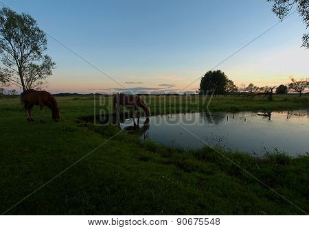 Horses on a pond.