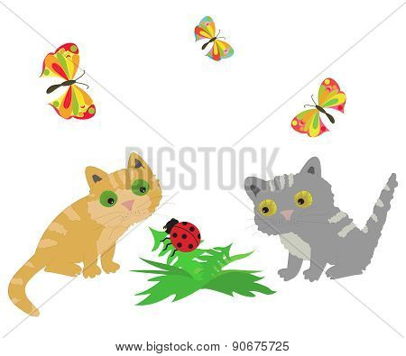 2 Cat, Ladybug And Butterflys