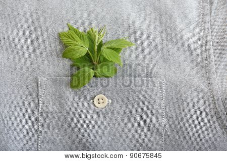 Twig with fresh leaves in shirt pocket, close up