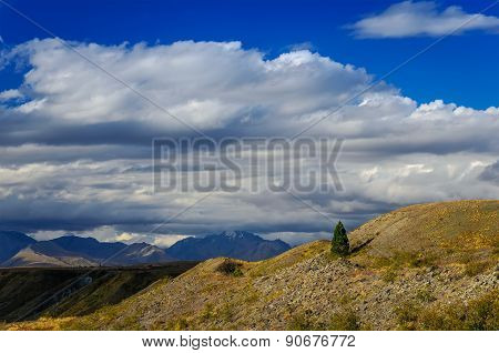 Lonely Pine Tree On A Hill Near  Lake Tekapo