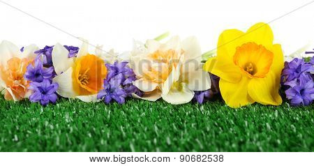 Beautiful bright flowers on green grass isolated on white