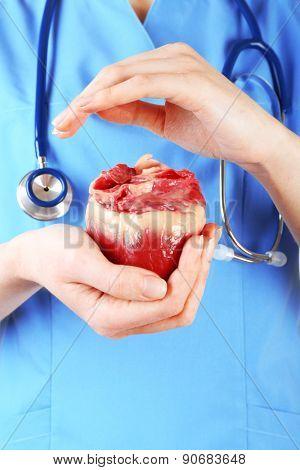 Heart in doctor hands, closeup