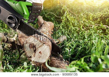 Man (lumberjack) Cutting Trees Using An Electrical Chainsaw