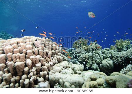 Colourful Pristine Coral Reef