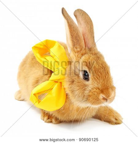 Cute brown rabbit with scarf isolated on white