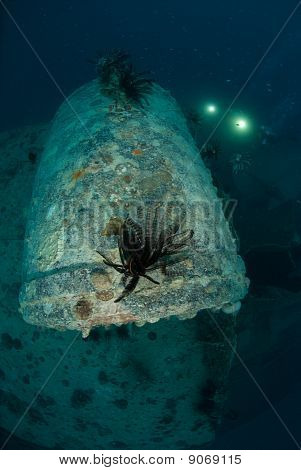 Rosalie Moller Shipwreck