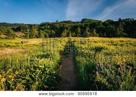 Wildflowers Along A Trail, At Tom Mccall Nature Preserve, Columbia River Gorge, Oregon.