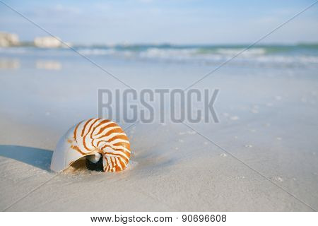 nautilus shell on a sea ocean beach sand with nice curve lens distorshion