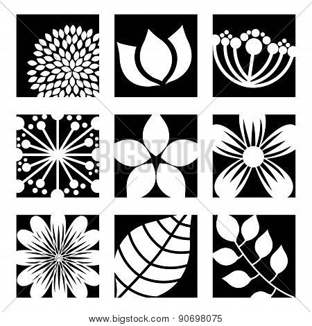 flowers design over white background vector illustration