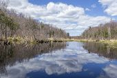 picture of swamps  - Sunny and beautiful day at a swamp in Wawayanda State Park - JPG