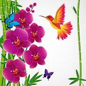 picture of jungle birds  - Floral design background - JPG