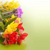 stock photo of wildflower  - Bright - JPG