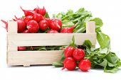 pic of wooden crate  - Fresh harvested red radish in wooden crate - JPG