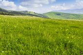 picture of pastures  - Mountain pasture in the morning on a background of the sky with a cloud - JPG