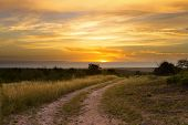 picture of dirt road  - Lovely grasland sunset with dirt road past tree and bright colours in clouds - JPG