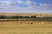 picture of hay bale  - Arable farmland with packed hay bales - JPG