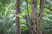 stock photo of rainforest animal  - Tropical rainforest with a monkey sitting on a tree - JPG
