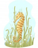 pic of seahorse  - Illustration of a Golden Seahorse Swimming About - JPG
