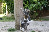 Постер, плакат: Kittens playing