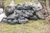 pic of dump  - a pile of full garbage bags in a dump - JPG