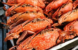 picture of cooked crab  - Close up of steamed crabs  - JPG