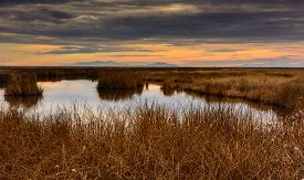 pic of not found  - Taken at the Bear River Migratory Bird Refuge - JPG