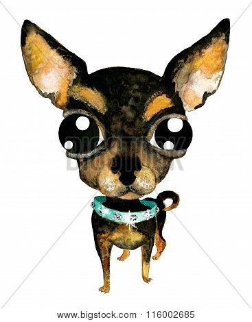 Hand Drawn Watercolor Illustration Without Tracing. Cute Chihuahua. Little Dog In Collar