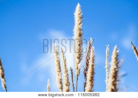 Flower blurred and blue sky background extreme close up with soft focus beautiful nature details