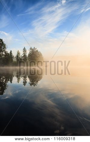 Forest at lakeside at foggy morning
