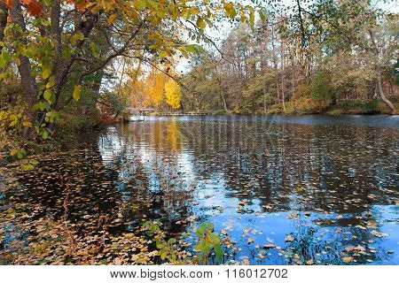 Pond In A Colorful Autumn Park. Nature