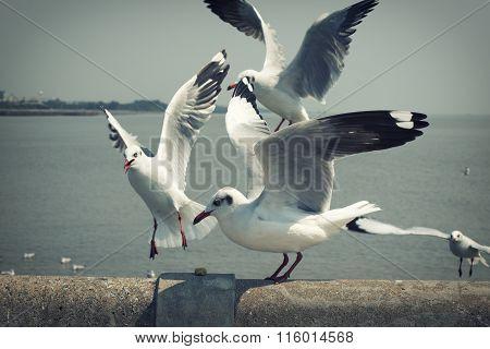 Seagull bird in Thailand Vintage set