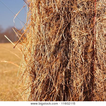 closeup of hay