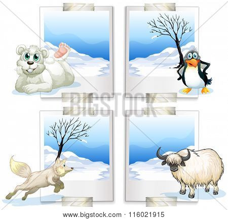 Four kind of arctic animals illustration