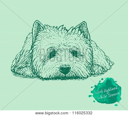 dog on a green background