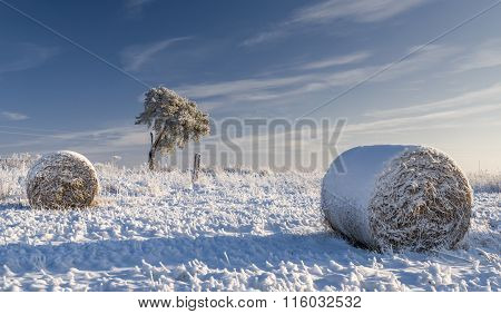 Snow Covered Hayfield