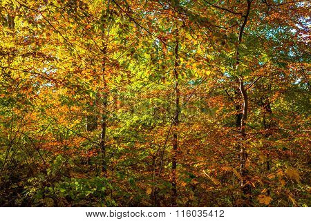 Autumn Leaves In Red And Yellow Colors