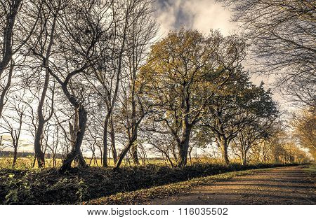 Trees By The Road In A Forest
