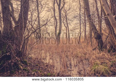 Reed In A Frozen Lake