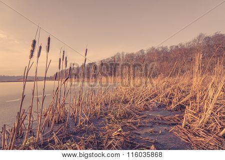 Reed At A Frozen Lake