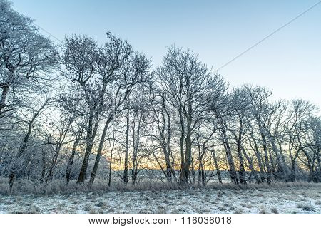 Tree Silhouettes In The Morning Frost