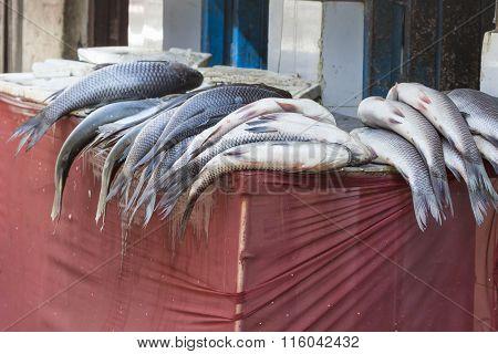Street Trade In Fish