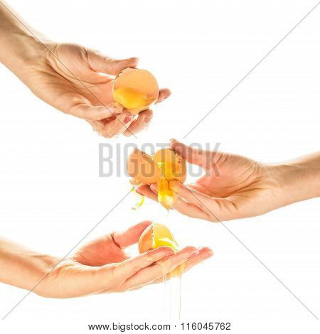 Hands Breaking Eggs. Egg Yolks Dripping, Falling, On White Backg
