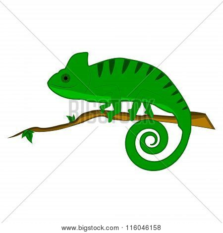 Chameleon on the branch vector illustration