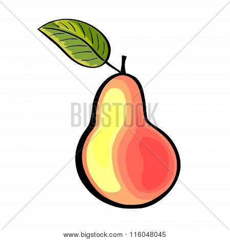 Hand drawn pear with a leaf. Pear illustration.
