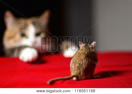Cat playing with little gerbil mouse on red table