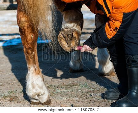 Trimming Hooves Of A Horse