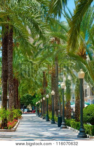 Palms Alley In The Center Of Alicante, Spain