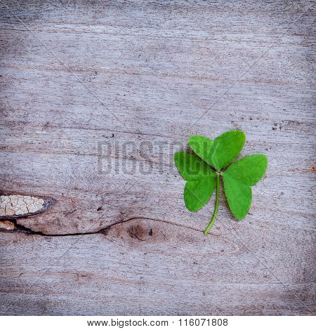 Close Up Clovers Leaves Setup On Rustic Wooden Background.